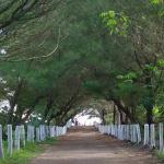 Taman Kayu
